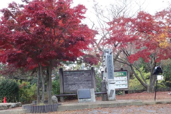 Takaosan 40sai 20